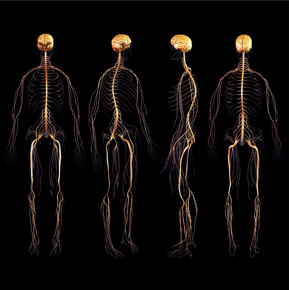 How Posture Affects Your Central Nervous System